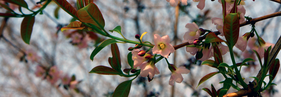 Mempat Flowers